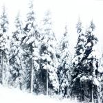 latelierdal voyage ouest canada 6