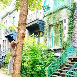 Montréal Latelierdal City guide