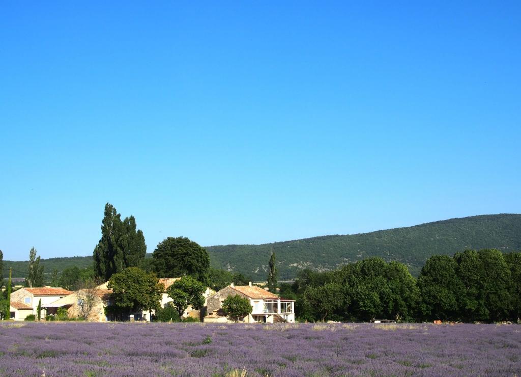 Provence city guide France Latelierdal lavande