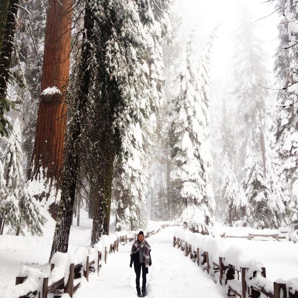 City guide Californie latelierdal Sequoia National Park