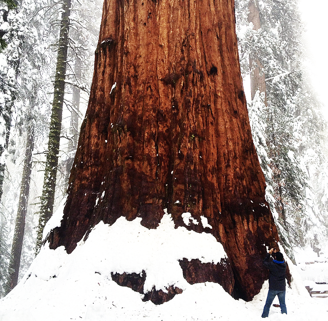 City guide Californie latelierdal Sequoia National Park