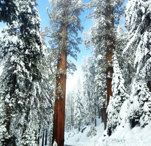 Sequoia Latelierdal blog mode et voyage