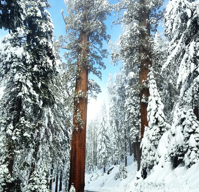 City guide Californie latelierdal sequoia national parc