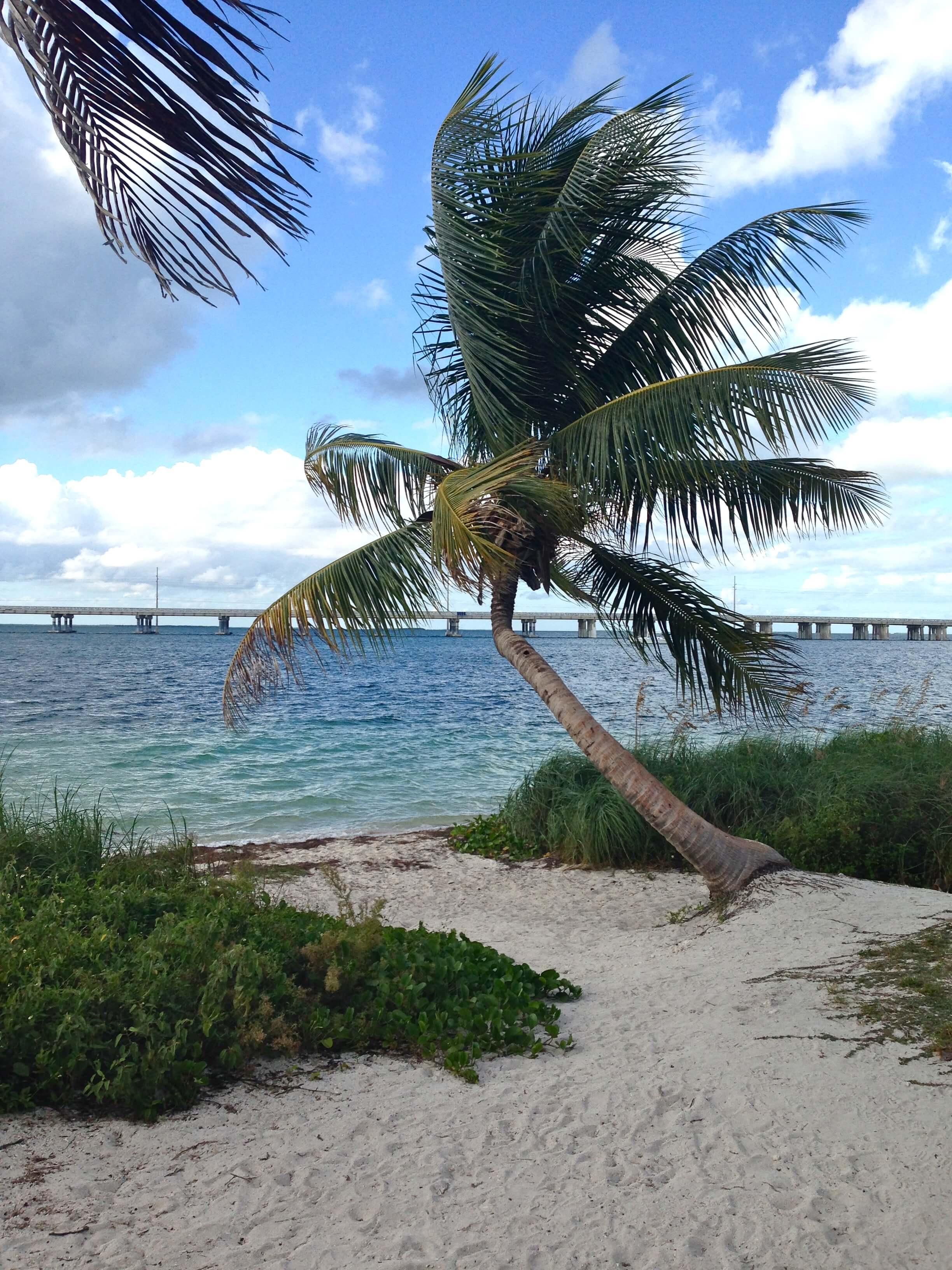La Floride Et La Nouvelle Orl 233 Ans L Atelier D Al