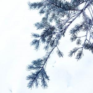 Canada neige Banff Hudson bay Latelierdal blog lifestyle voyage city guide